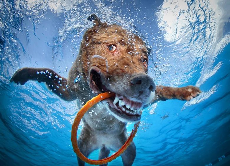 seth-casteel-underwater-dogs-13